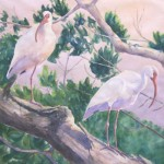 """Two Ibis""    Watercolor by Stefanie Graves    17"" X 17"""