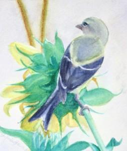 Lady Finch