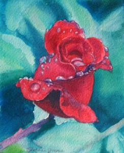 Rose Droplets