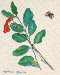 Berries and Acorns