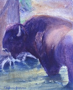 Bison Cool