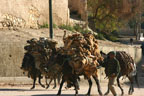 Donkeys carry hides past our pension in Fez, Morocco
