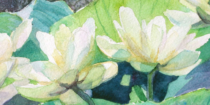 """Lotus"" Watercolor by Stefanie Graves"